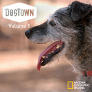 DogTown: Against the Odds